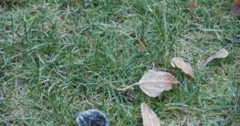 Foto: Hauert. - Zur Vermeidung von nachhaltigen Schäden empfiehlt es sich, den Rasen bei Frost oder bei Raureif nicht zu betreten.