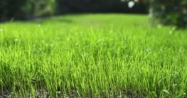 Hausbesitzer sollten wissen, welche Bedürfnisse Rasengräser haben. Dann klappt's auch mit dem satten Grün im Sommer. Foto: djd/Floragard Vertriebs-GmbH, Oldenburg