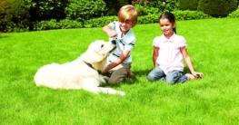 txn. Spielende Kinder oder tobende Hunde sind für einen kräftigen, gesunden Rasen auf nährstoffreichem Boden kein Problem. Foto: Neudorff/txn