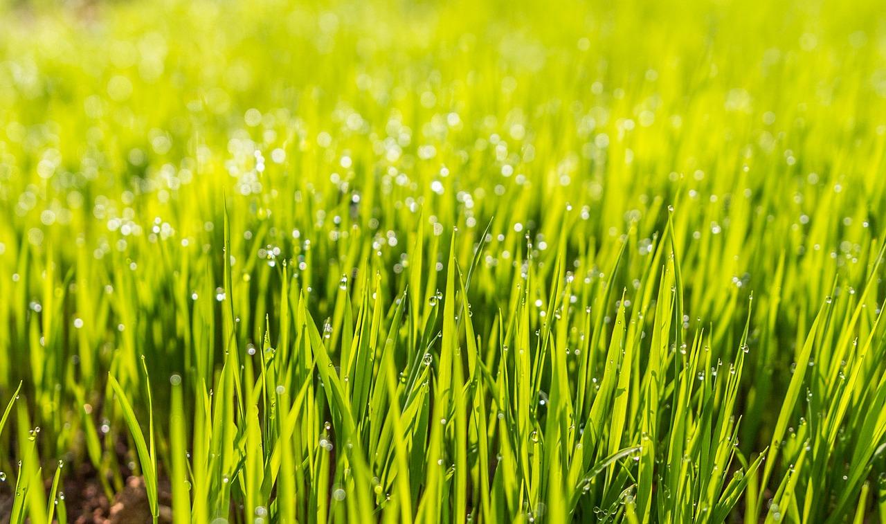 Mähroboter – der smarte Haushaltshelfer für den perfekten Rasen