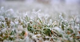 Rasenpflege im Winter